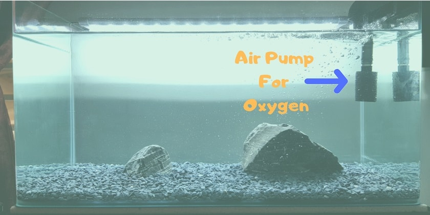 Air-Pump-for-Oxygen