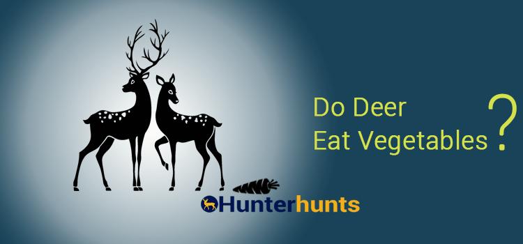 Do Deer Eat Vegetables