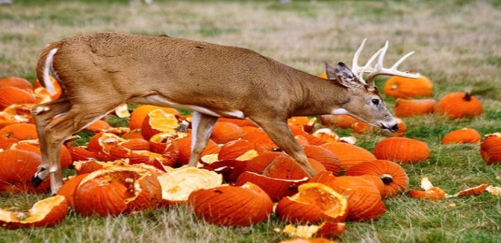 deer-eat-carrot