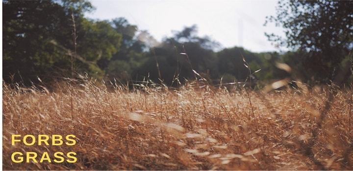 Frobs-Grass