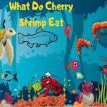 What-Do-Cherry-Shrimp-Eat