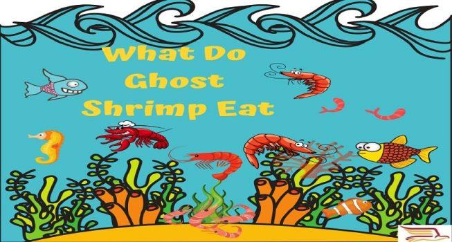 What-Do-Ghost-Shrimp-Eat