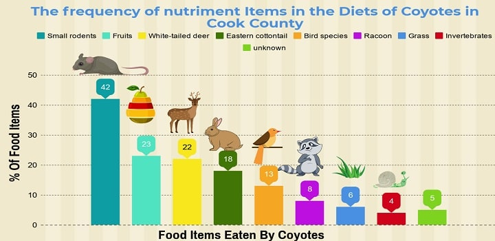 What-do-coyotes-eat-graph