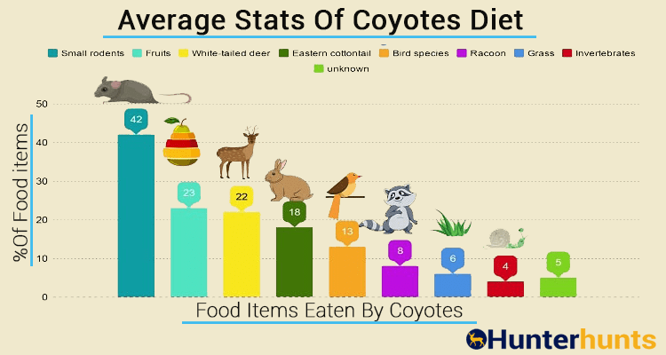 What do coyotes eat graph