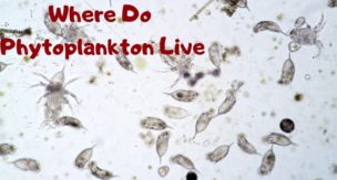 Where-Do-Phytoplankton-Live