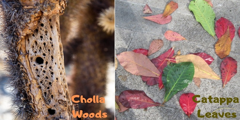 cholla-woods-and-catappa-leaves