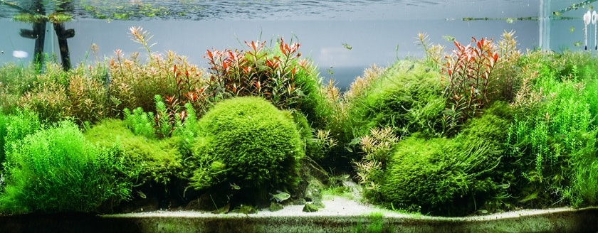 plants-in-the-aquarium