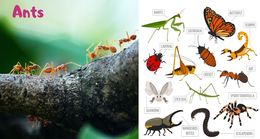 Ants-And-Insects