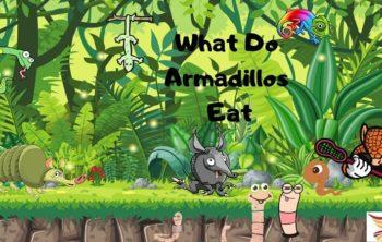 What-Do-Armadillo-Eat