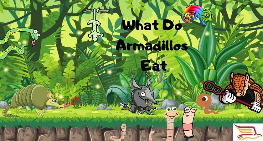 What-Do-Armadillo-Eat