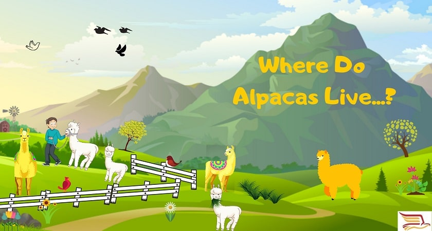 Where-Do-Alpacas-Live