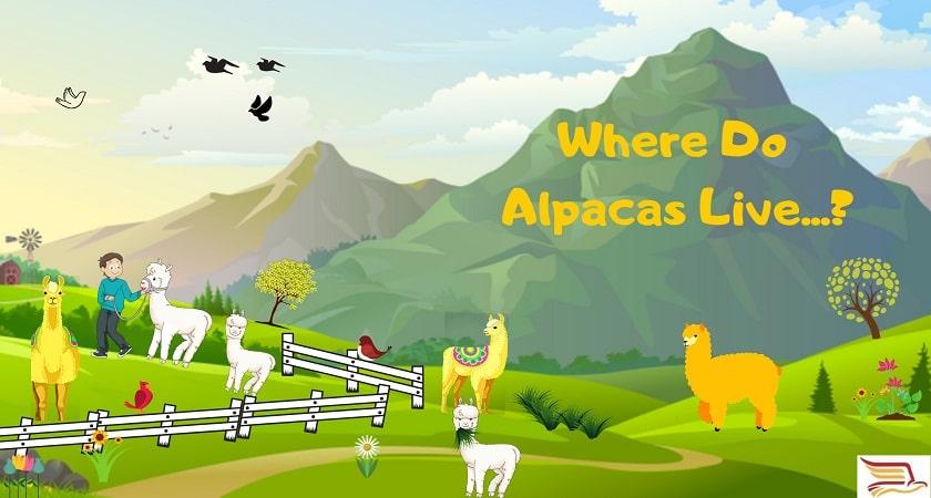 Where-Do-Alpacas-Live