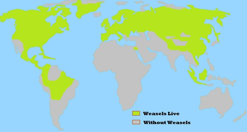 Weasels-Live-Map