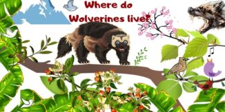 Where-Do-Wolverines-Live