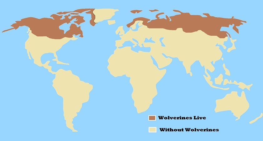 Wolverines-live-Map