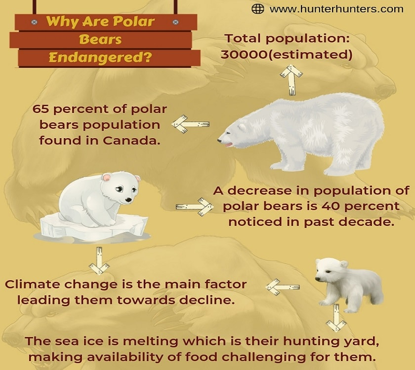 Polar-Bear-Facts