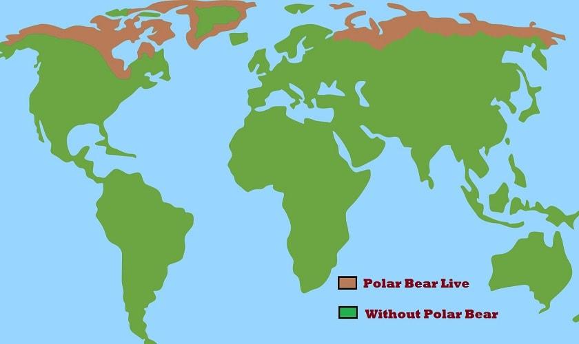 Polar-Bear-Live-Map