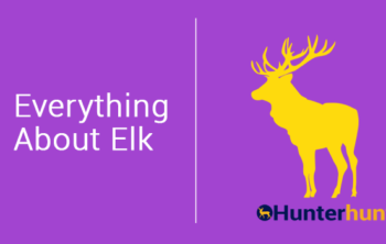 What Do Elk Eat