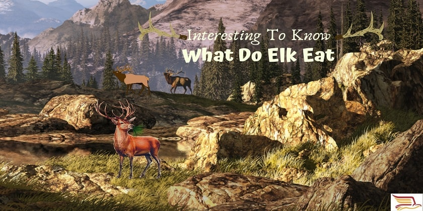 What-Do-Elk-Eat