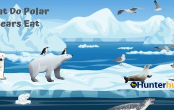What-Do-Polar-Bears-Eat