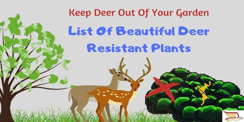 Deer-Resistant-Plants