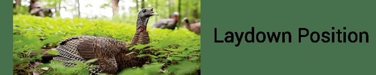 Avian-X Laydown Hen Turkey Decoy laydown position