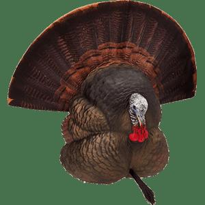 FlexTone Turkey Decoy