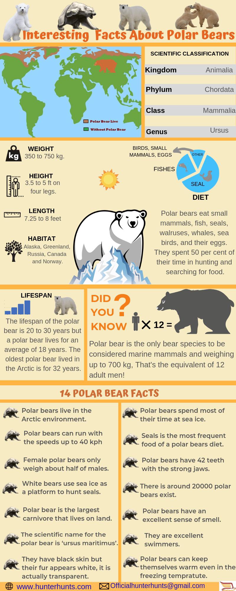polar bear facts infographic